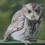 "Visitor at Dusk, Screech Owl | Pastel on Paper | 10"" x 15"""
