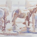 """Horse Baths Royal Winter Fair 