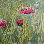 "Field Poppies | Watercolour | 22"" x 29"" 